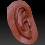 Фото сканирование уха и создание имплантата 1